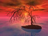 A ancient tree isolated all by itself
