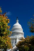 U.s. Capital Building Dome, Washington Dc, Autumn Yellow Leaves