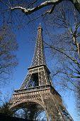 Eiffel Tower, Hide By Tree, In Paris