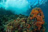 Maravilla submarina