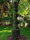 Shaped tree plant