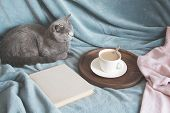Hygge And Cozy Concept. British Cute Cat Resting On Cozy Blue Pled Couch In Home Interior Of Living poster