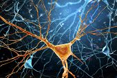 3d Illustration Of Human Brain Neurons Structure. A High Resolution. poster