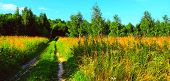 Road In Wild Field To Forest With Herbs In Summer Sunset. Early Autumn Scenic Field Footpath Or Grou poster