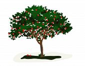 picture of apple tree  - Apple Tree is hand drawn original artwork - JPG