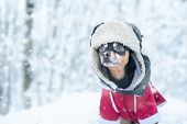 Dog  In Funny Hat  And A Sheepskin Coat. Winter Theme, Cold, Dog Clothes, Christmas, New Year, Dog Y poster