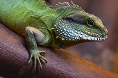 Close up of the lizard on the tree