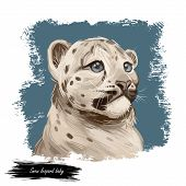Snow Leopard Baby Tabby Portrait In Close Up. Watercolor Digital Art Illustration Of Panthera Uncia. poster