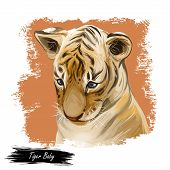Tiger Baby Tabby Watercolor Portrait In Closeup. Hand Drawn Panthera Tigris, Wild Cat Of Large Size. poster