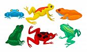 Frogs Collection, Amphibian Animals Of Different Colors Vector Illustration poster