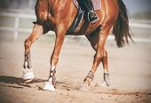The Legs Of A Graceful Unshod Horse, With A Rider In The Saddle, Trotting Across The Sandy Arena, An poster