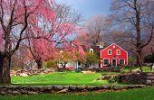 Farmhouse In Spring