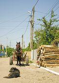 arnés del caballo