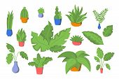 Vector Icon Set Different Plants, Colorful Leaves Isolated On White Background. Leaf Collection Vect poster