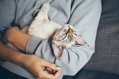 Devon Rex Kitten Is Laying Down In Owners Arms Feeling Happy Content And Purring. Beautiful Black Co poster
