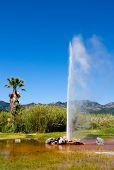 Old Faithful Geyser in Napa Valley, California