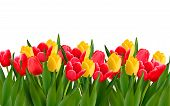 foto of easter decoration  - Holiday background with colorful flowers - JPG