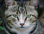 Olhos de esmeralda