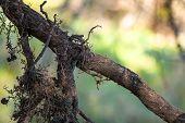 Closeup Roots Of Tree