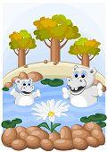 Flusspferde bewundern ungewöhnliche Kamille