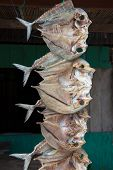 Dried Fish, Sulawesi, Indonesia