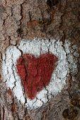 Heart on a Bark