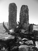image of zebu  - Memorial monument for some important Malagasy person who passed away - JPG