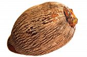 One Coconut