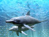 stock photo of bottlenose dolphin  - Dolphins - JPG