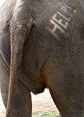 Help Text On Elephant Backside