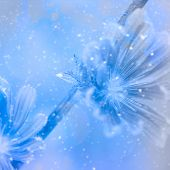 Snowy Blue Weeds