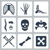 stock photo of pelvis  - Vector isolated skeleton icons set over white - JPG