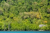 Tropical dense jungle coastline on a limestone hill, Pang Nga bay, Thailand