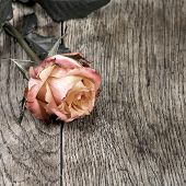 Beautiful Roses On A Wooden Surface. In Dark Colors.