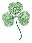 Vector leaf clover isolated. Macro illustration.