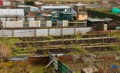 Allotment Plots In Rows