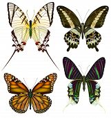 Set of isolated vector butterflies.