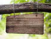 blank wooden sign board hanging on branch
