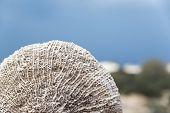 Oman Beach Sponge