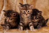 Cautious Kittens