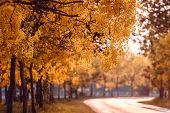 Beautiful Golden Shower Tree Under Blue Sky