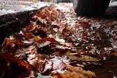 Wet leaves on road