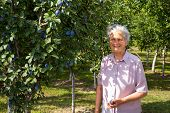 Retiree woman checks plums