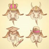 Sketch Unusual Goats Set