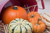 Close Up Of Harvest Bounty