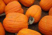 Pumpkin Fruit