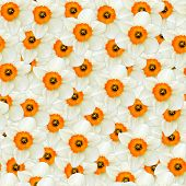 Seamless Background Of Flowers White Narcissus