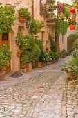 Flower Street In Spello (umbria, Italy)