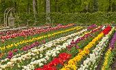 Beautiful European Garden