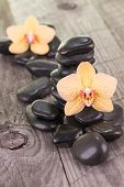 Yellow Moth Orchids And Black Stones On Weathered Deck